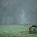 283/366 Fog by Jenny Stein