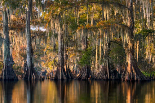 Southern Bayou por David Thompson