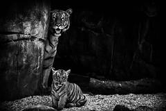 Buzi and Berisi (Black & White)