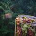 Bird by .noctifer
