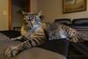 SLO Cat 2