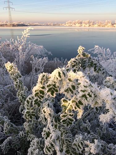 Winterlandschaft mit Rosenbusch , NGID1770683749