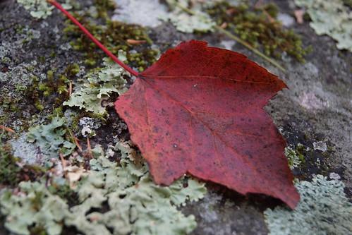 grater-woods-DSC03848