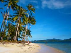 Coconuts-Palawan