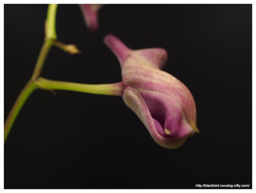 Orchid #02