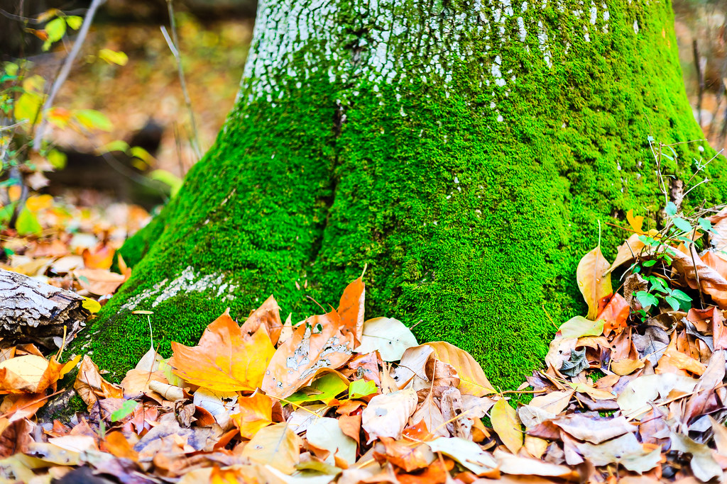 Moss and fallen leaves [Flickr]