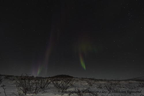 Aurora over the tundra-8073