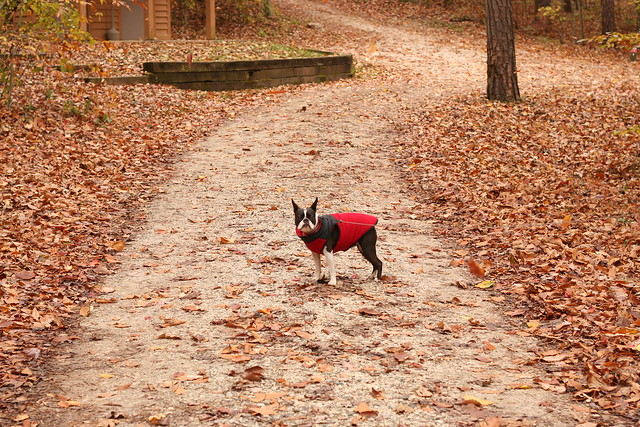 James River State Park Fall 2014 (239)
