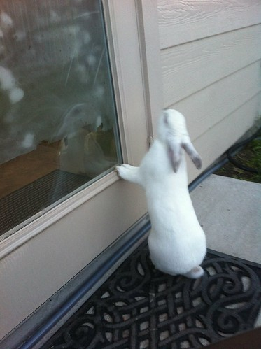 Luna Bunny peaking in the back door!