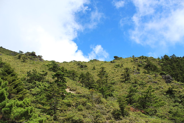 關山野生動物重要棲息環境是中央山脈保育廊道的一份子,2000年設立是為了填補南部的缺口。