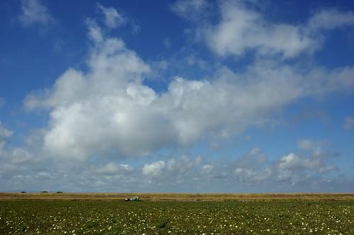 california landscape nikon roadtrip nikond70s dslr yolocounty sacramentoriverdelta