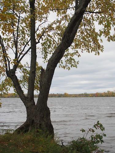 Ottawa River by fern trail