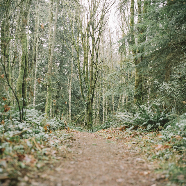 Cougar Mountain Trail, WA