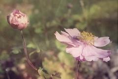 Pink in my garden