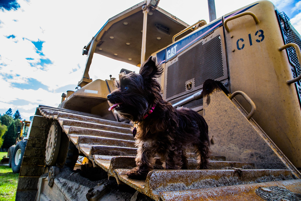 Baily On A Bulldozer