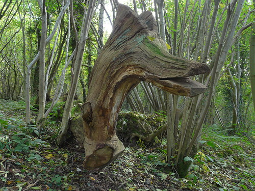 Horse, Puplet Wood, Chelsham and Farleigh