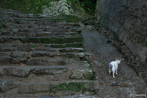 Cat at Dutch stone wall