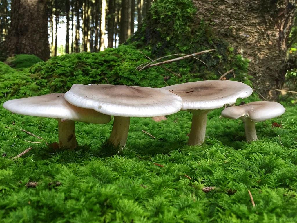 Mushroom family portrait.