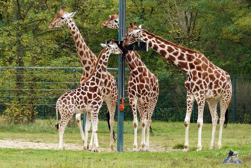 Tierpark Berlin 26.10.2014 130