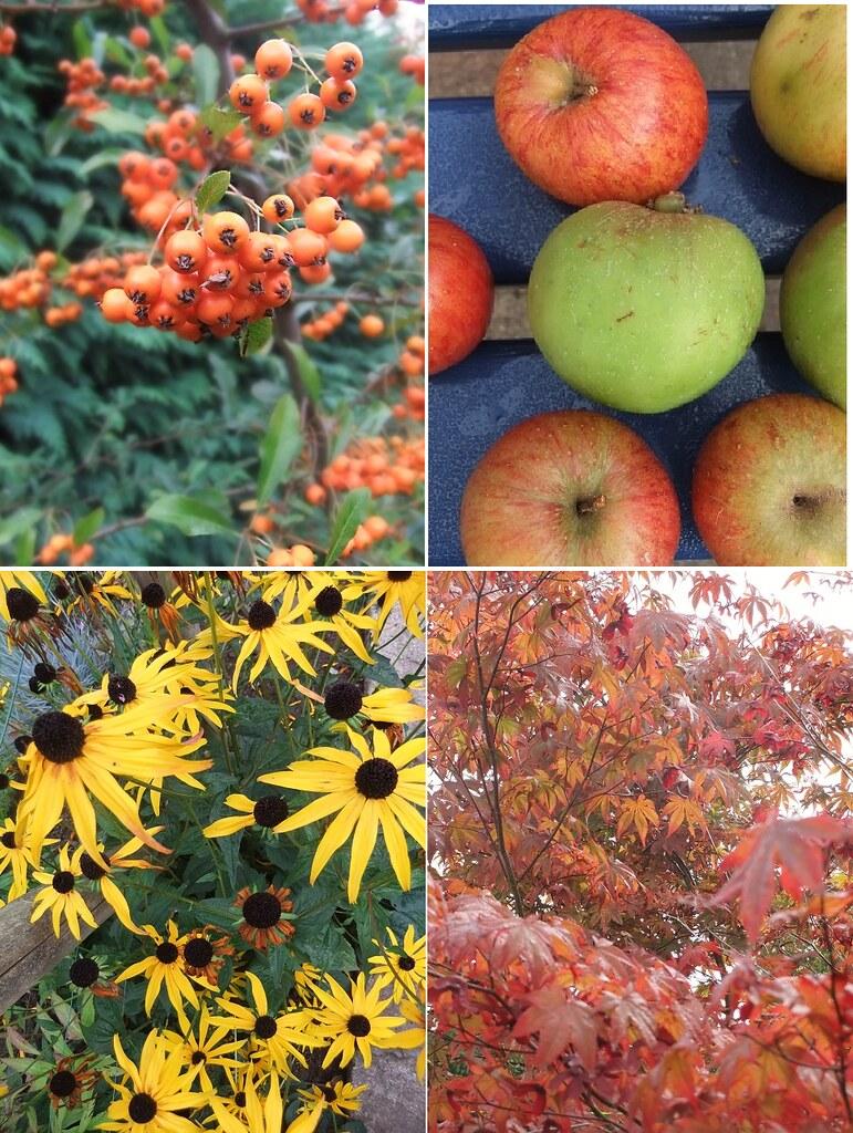 autumn montage 2