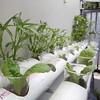 Ini kebun #hydroponic ku mana kebun mu? #berkebun #berkebunyuk #food #fresh #foodathome #growyourfood