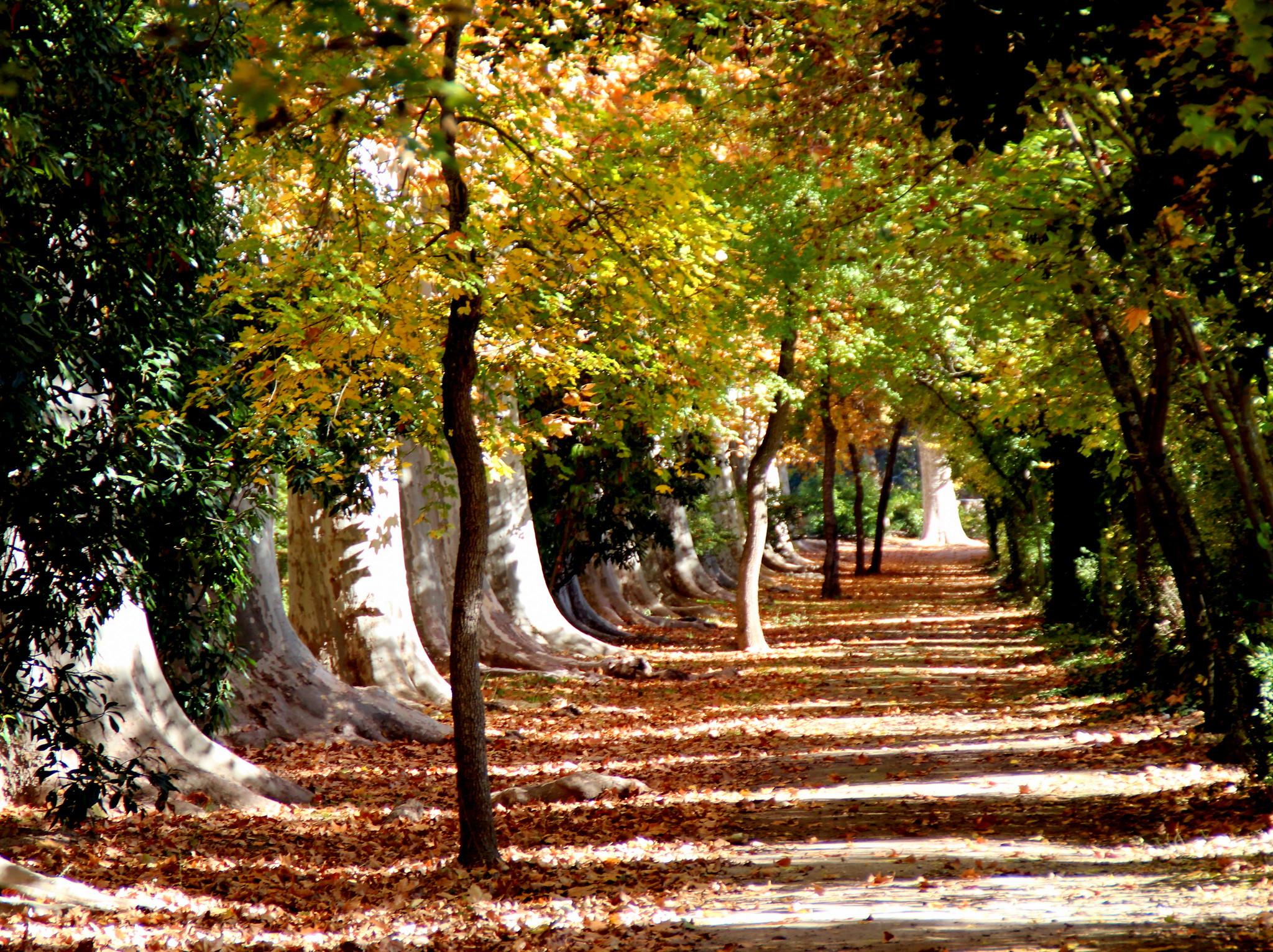 Oto o en los jardines de aranjuez flickr photo sharing for Jardines en otono
