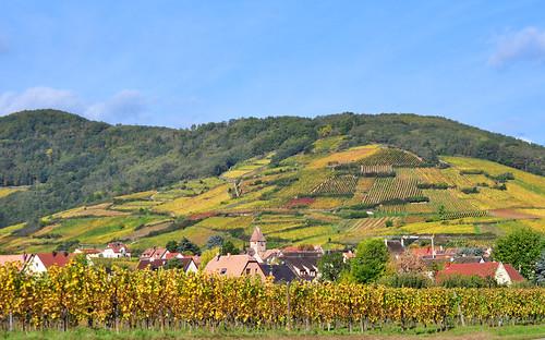 france automne landscape vineyard europe village alsace paysage vignes hautrhin routedesvins wineroute ammerschwihr michelemp