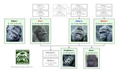 Gorilla Family - Moscow (Version 2)