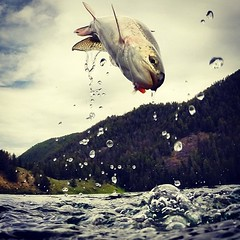 @marchesiphoto with an amazing capture. Awesome feed across many fields. #flyfishing #catchandrelease #rainbowtrout #fishing