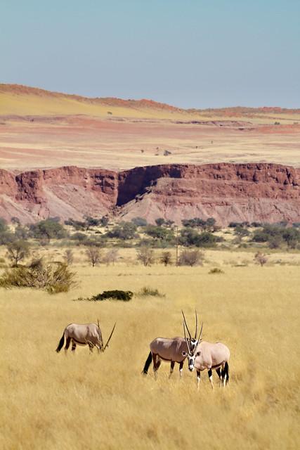 Oryx (explore)