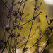 Spider's Web by koluthcka
