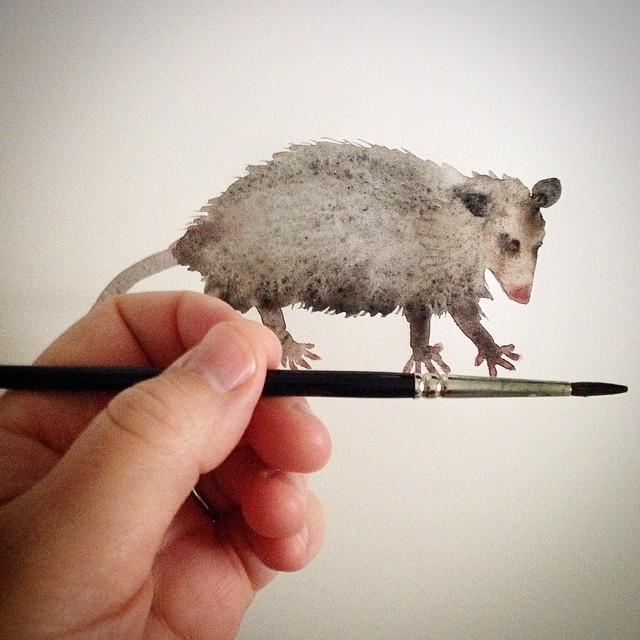 Opossum study.