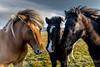 ISLANDIA-VIAJE-FOTOGRAFICO-AUTUMN-2-16