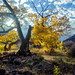 Red Rapids Cottonwood by Robert H Carney