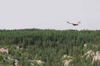 Observation des vautours dans les gorges de la Jonte - Carte de France touristique