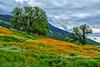 Tehachapi Gold