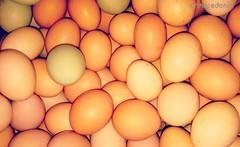 Ovos. Eggs. ägg. Eier. Huevos. ova, ovojn #crmacedonio.com #ovo #egg #eler #ägg #huevos #ova #ovojn #food #comidasaudavel #fazenda #farm #hens #poedeiras #avicultura #poultry #Xperia #fotografia #brasil #alimentos