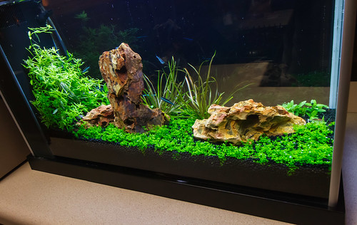 nano aquairum with high light plants