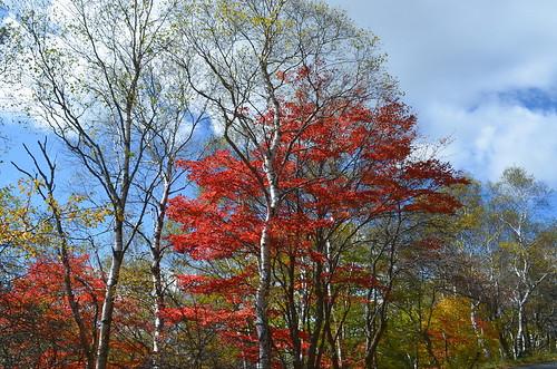 ★入笠山(にゅうかさやま)と牧場の秋★信州・富士見町から・・・
