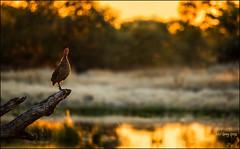 Nature's-alarm-clock_DSC6209