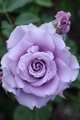 Bonjour Une fleur nous offre sa beauté on ne peut que l'admirer La vie est un très long chemin on ne peut suivre que son destin L'amitié est un beau partage on ne peut en récolter que les avantages Vers vous cette pensée en signe d'amitié je vous souhaite