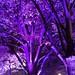 Potsdamer Platz | Alte Potsdamer Straße | Festival of Lights 2014