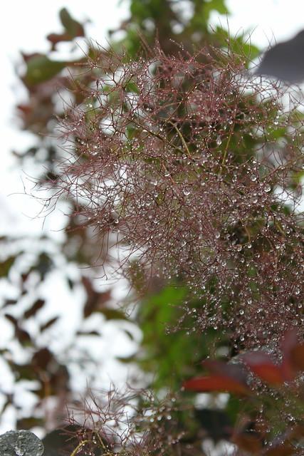 20130724_6078-smoke-tree-rain