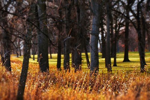autumn canada landscape lumix winnipeg manitoba cans2s fz200 churchilldriveparkway