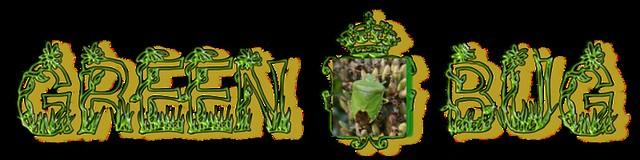 GreenShieldBug