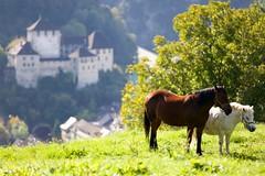 Wildpark, Feldkirch