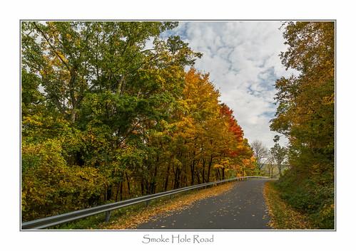 road trees westvirginia spruceknobsenecarocksnationalrecreationarea smokeholeroad