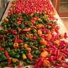 Garden bounty at Cutter Ranch: peppers and tomatoes ready to dry.
