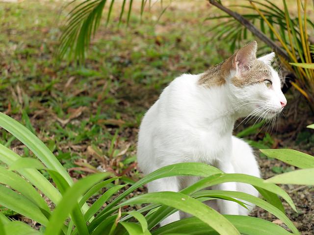 Cat2sharpness