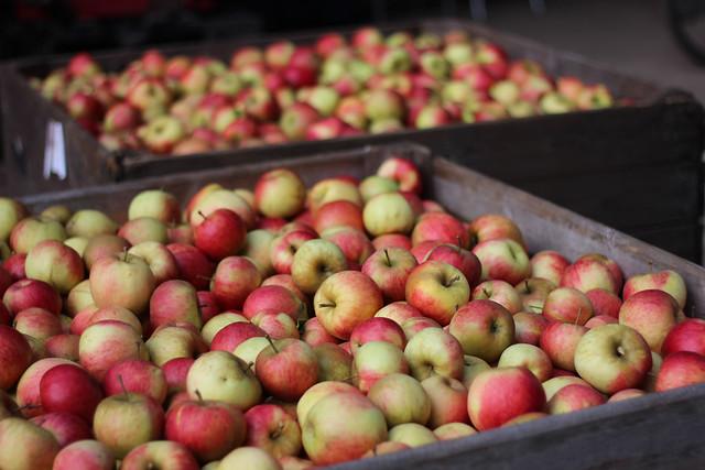 appels in bakken
